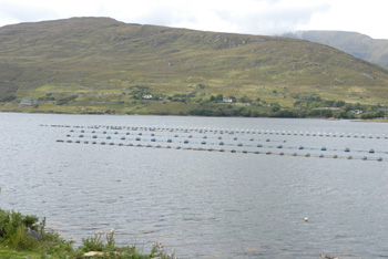 Fish Farm-Mayo