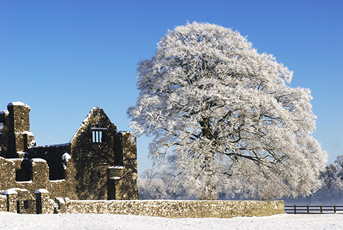 Snow Scene-Bective Abbey